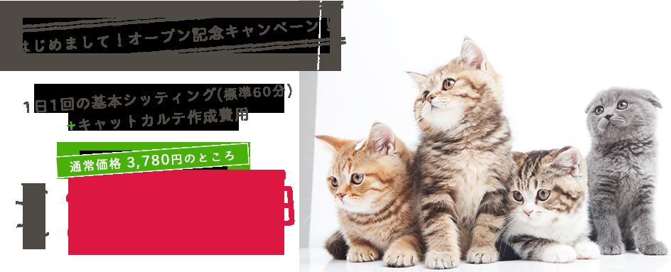 はじめまして!オープン記念キャンペーン!1日1回の基本シッティング2,222円